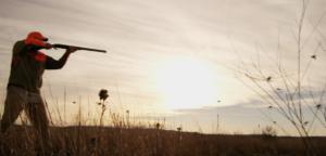 Hill Country quail hunting